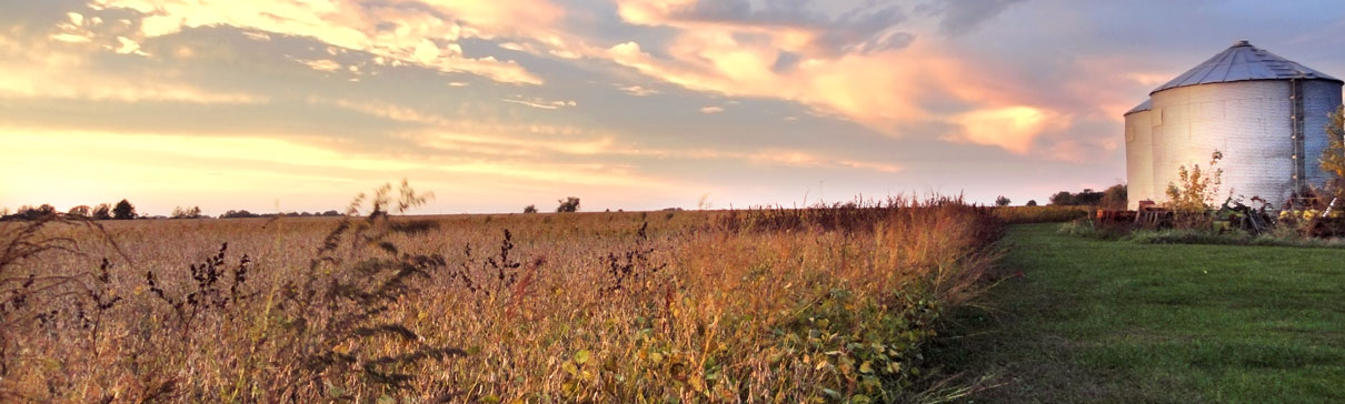 Soybean field and silos at sunset