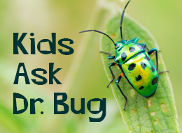 Kids ask dr. bug