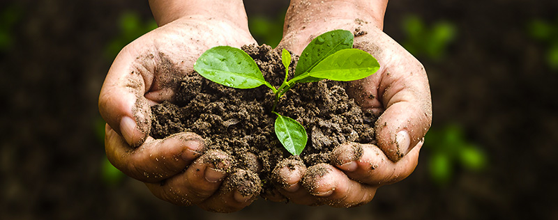 Hands holding a plant seedling in rich soil