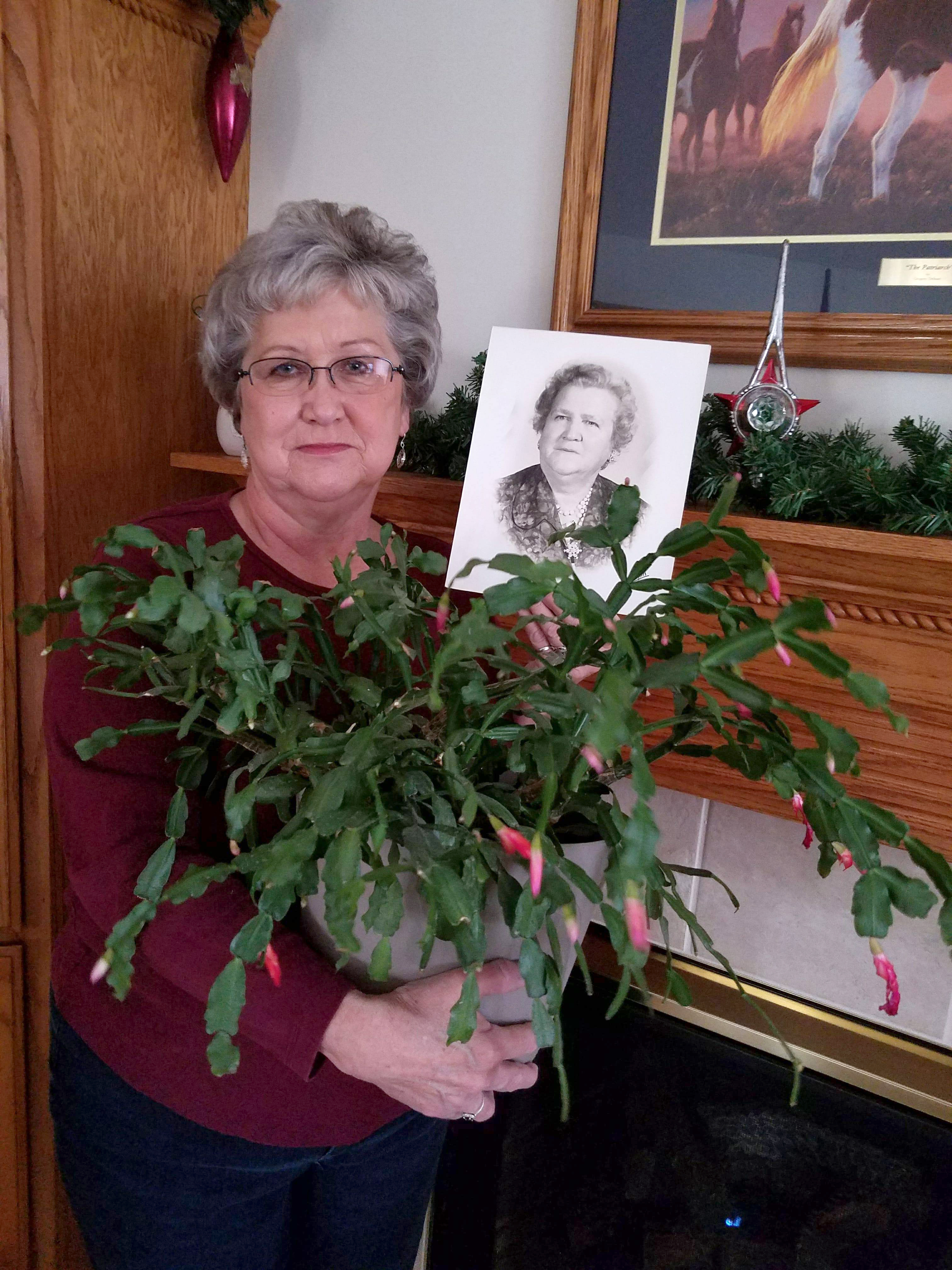 Becky Little White has a Christmas cactus grown from cuttings of her grandmother's cactus. Her grandmother Lois Little (in photo) had 21 children and 75 grandchildren at the time of her death in 1965. Many of them celebrate Christmas with the blooming of