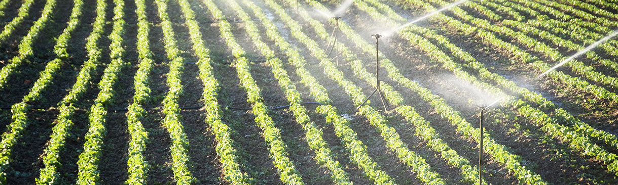 Irrigation system spraying water on field of crops