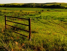 Fenced-in pasture