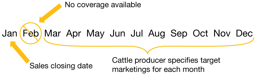 Sales closing date: January. No coverage available in February. March through December, cattle producer specifies target marketings for each month.