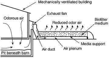 Graphic showing exhaust air passing from a livestock building through a biofilter.