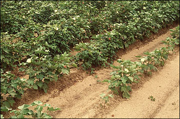 Low pH soils