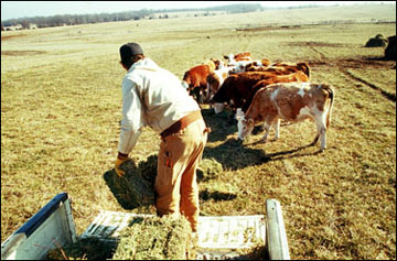 To minimize losses with small square bales fed on the ground as loose hay.