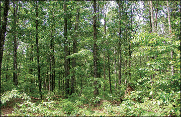 A typical acre of Missouri forest contains about 73 green tons of aboveground woody biomass