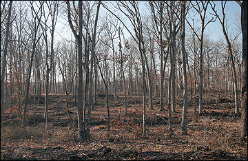 A healthy, vigorous forest in mid-Missouri after a commercial timber harvest and woody biomass removal