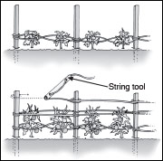 Stake-and-weave trellising system