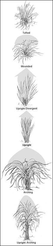 Ornamental grasses can be classified by various architectural forms.