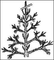 Prune evergreen trees