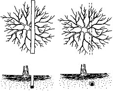 Trenching near a tree can kill almost half its roots.