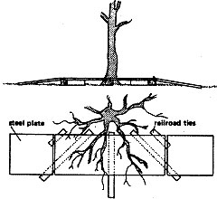 Use of bridge