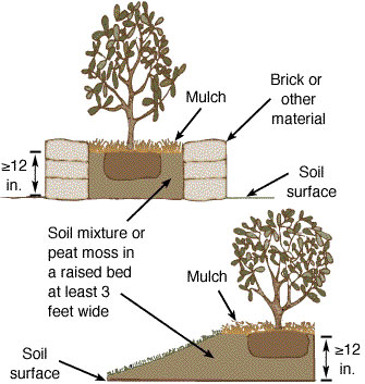 Examples of raised beds