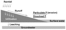Potential pathways for phosphorus loss
