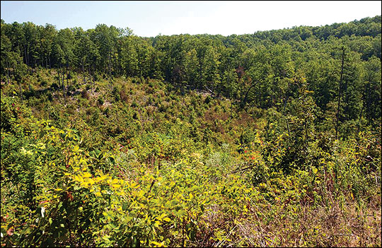 Clearcutting allows for a new crop of trees