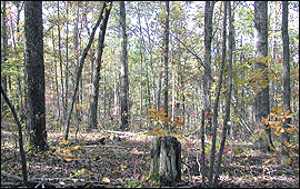 Small group openings within the forest can benefit wildlife
