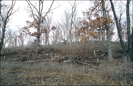 Brush piles created near field edges provide escape cover
