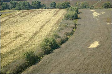 A field border around a crop field.