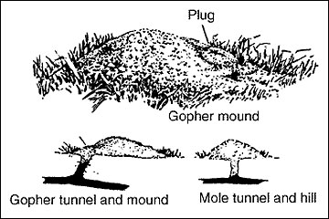 Gopher mound and a mole hill