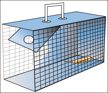Cage traps can successfully remove problem rabbits