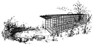Wire-mesh live trap