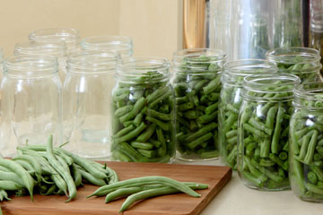 Green beans prepared for canning