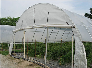 High tunnels are plastic-covered, solar greenhouses