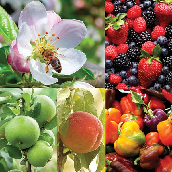 Collage of fruits, vegetables and a honey bee on a flower.