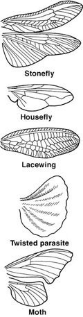 Insect wings are almost always found only on mature insects