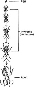 Immature insects that undergo incomplete metamorphosis are called nymphs