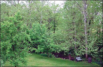 With proper planning, native vegetation, trees and shrubs can be maintained to provide many benefits